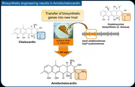 Biosynthetic engineering results in Amidochelocardin